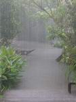 Thai downpour
